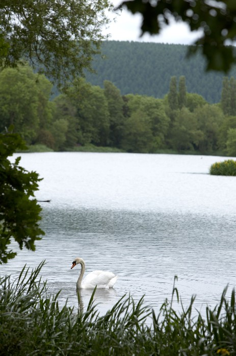 A view of a swan on Walcot Lakes